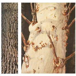 Big Tree Yearning in Jaburara Country (diptych)