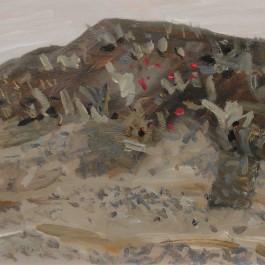 Fowlers Gap Hill Study