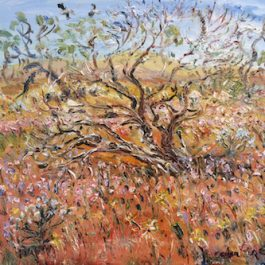 Bush Turkeys Flying above the Pink Everlastings on old Gold Mine (near Yalgoo, WA)