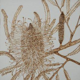 Banksia Study Ii