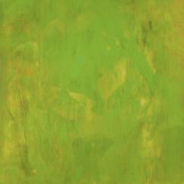 Xylem Series – Haplostele 5