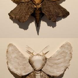 Lepidotera Folium (Leaf Moth) DIPTYCH