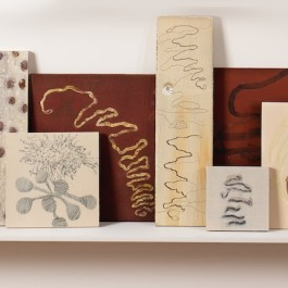 Tag – the Mark of the Scribbly Gum Moth (shelfscape)