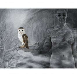 Birds of Prey 2011/2013 – Landscape Owl (Edition of 3)
