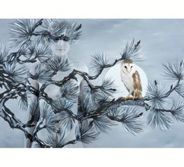 Birds of Prey 2011/13 – Owl in Oriental Fir