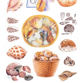 Shell Drawings, 2011 (Edition of 100)