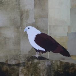 Brahminy Kite – Yangon Zoo