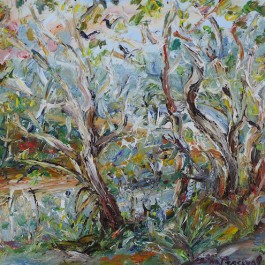 Currawongs in the Gums in the Afternoon Light