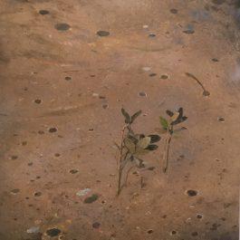 Mangrove suite 3