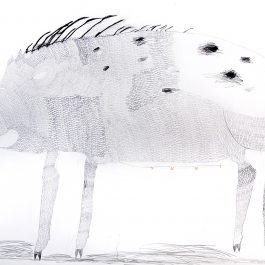 Wild Pig