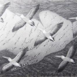 Nirimba Beelier (Pelican, River)