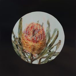 Firewood Banksia Flower