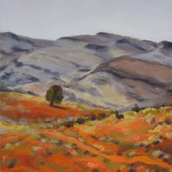 Flinders Ranges 6
