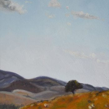 Flinders Ranges 11
