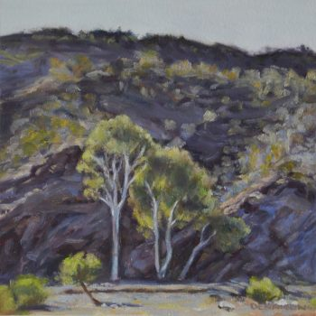 Flinders Ranges 15