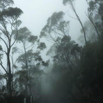 Mist #4 (Edition of 20)