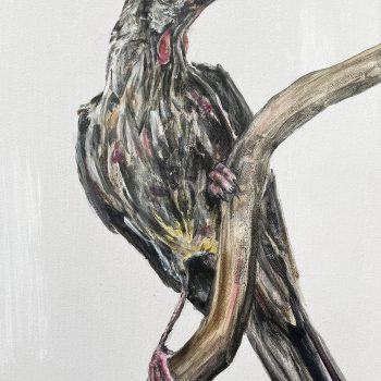 Everything at Once (Red Wattlebird)
