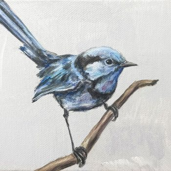 Lost Moments (Splendid Wren)